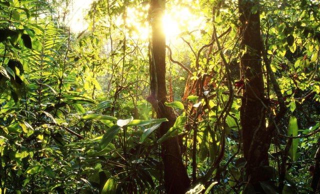 rain-forest2